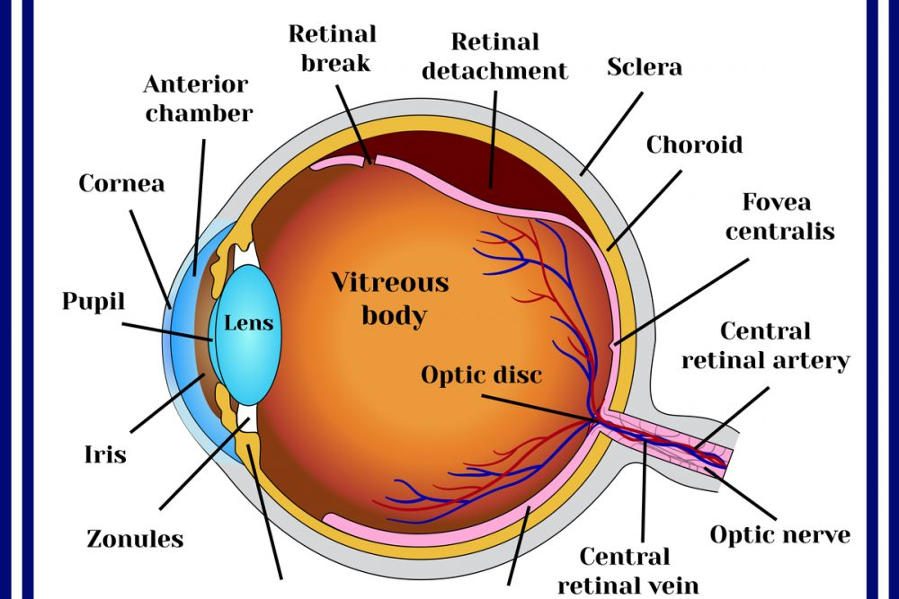 What Is Retinal Detachment & How to Prevent It