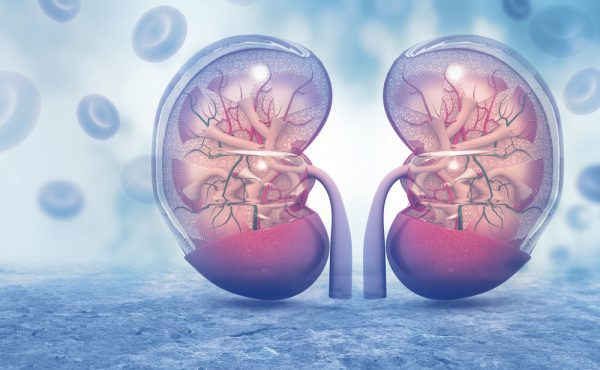 Protecting Your Kidneys From Kidney Disease