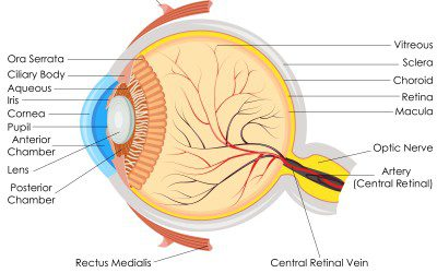 Diabetes and Your Eyes — More Than Retinopathy
