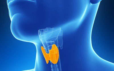 Diabetes and Your Thyroid
