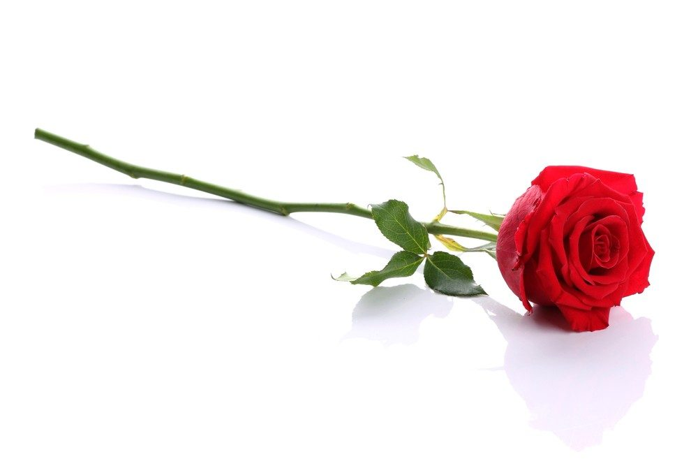 "Annual ""Spare a Rose, Save a Child"" With Diabetes Campaign Under Way"