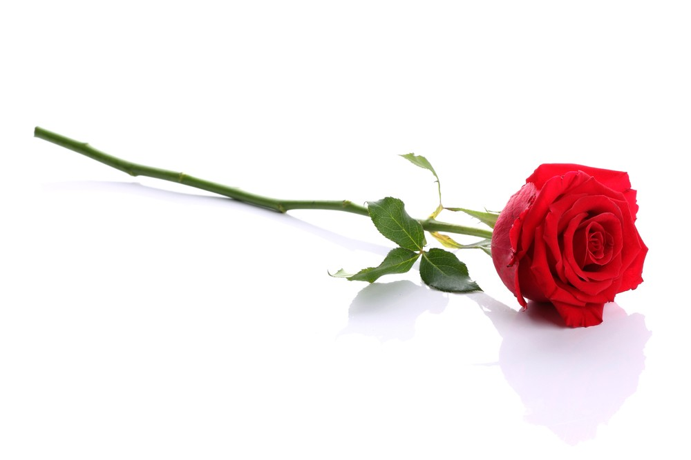 """Annual """"Spare a Rose, Save a Child"""" With Diabetes Campaign Under Way"""