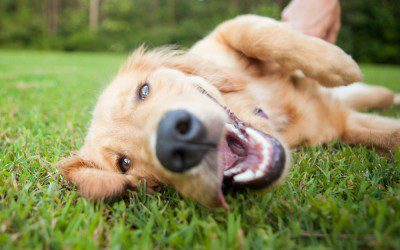 Dogs for Hypoglycemia?