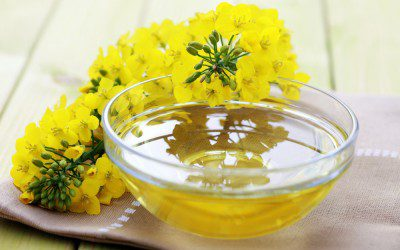 Belly Fat May Be Reduced By Canola Oil