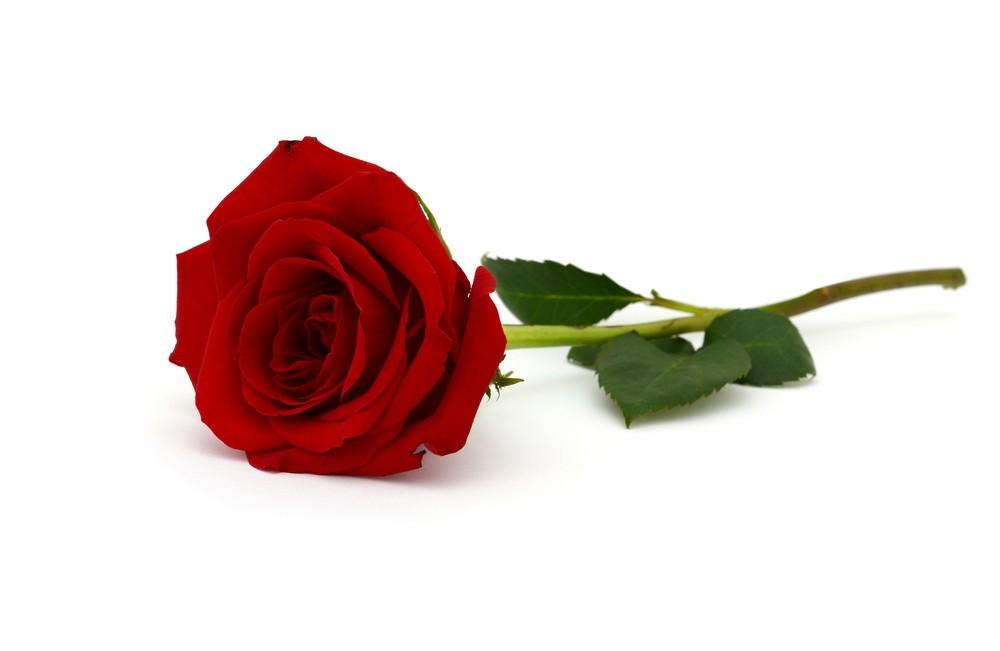 """""""Spare a Rose, Save a Child"""" With Diabetes This Valentine's Day"""
