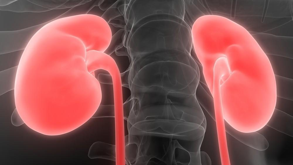 Kidney Disease Shown to Increase Diabetes Risk
