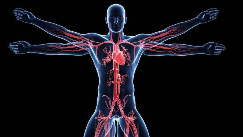 Diabetes Mellitus and Peripheral Artery Disease: A Translational Overview of Microcirculation