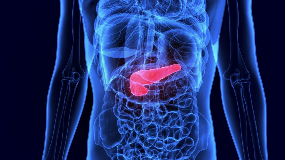 Type 1 Diabetes: What's Happening Inside the Body?
