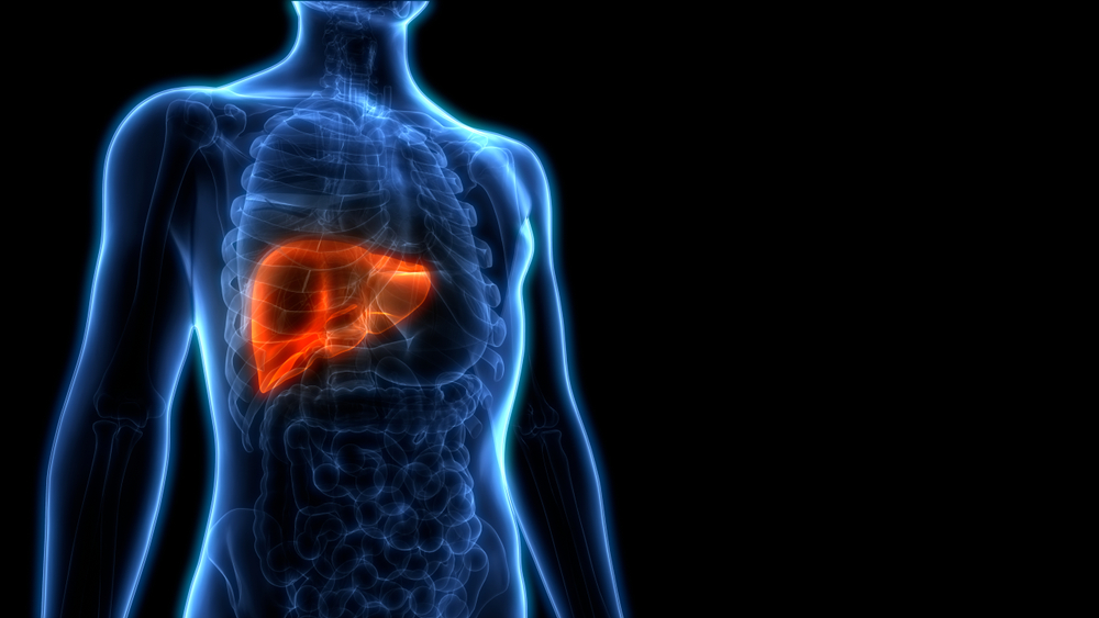 Computer depiction of liver in body -- New Liver-Targeted Insulin Shows Promise for Type 1 Diabetes: Study