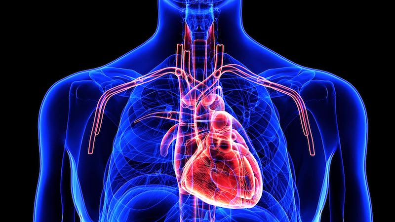 Does Diabetes Hurt Your Heart?
