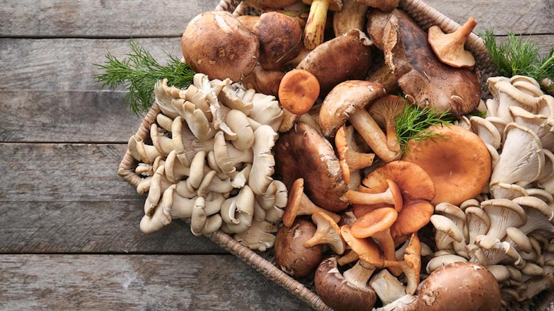 Eating Mushrooms Linked to Lower Cancer Risk