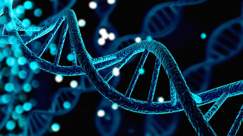 Genetics and Social Factors Linked to Type 2 Diabetes and Obesity