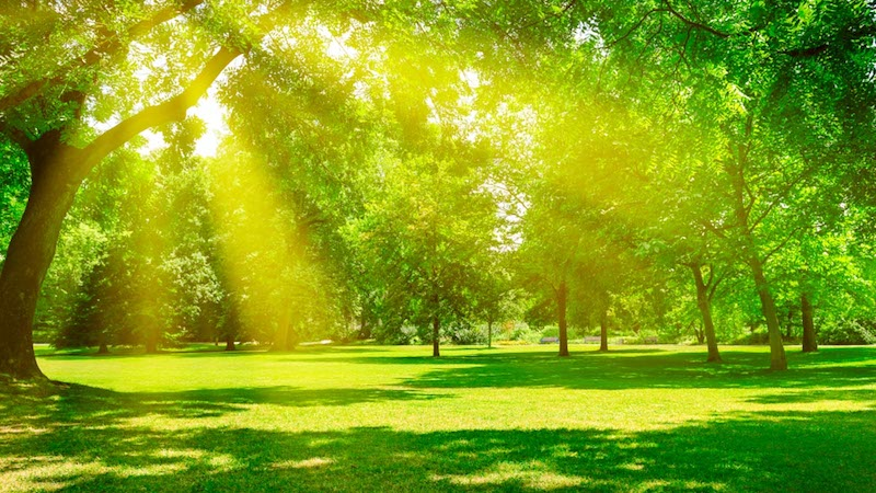 Daytime Outdoor Light Exposure Linked to Sleep Outcomes