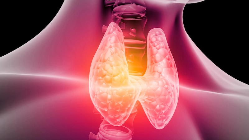 Protein and Saturated Fat Intake Linked to Better Thyroid Function
